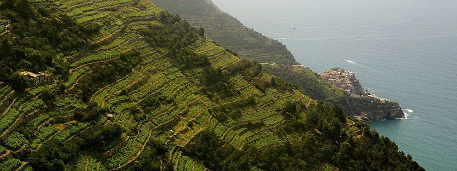 Cinque Terre - Tour - mit ihrem örtlichen Reiseführer